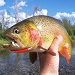 Fish the Fly - Expert guide service offering float & wade fishing trips on all local waters. Exclusive access to remote backcountry creeks! Fishing gear included, lunch prepared streamside.