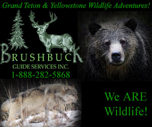 BrushBuck Wildlife and Scenic Tours - Wildlife tours.