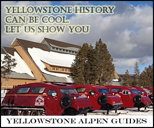 Yellowstone Alpen Guides - Park Snowcoach Tours - Individual private tours of Yellowstone in top quality historic snowcoaches to photograph wildlife and park scenery in winter. Kids = $115, seniors = $120, adults = $125.