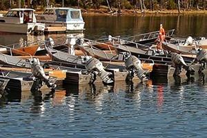 Bridge Bay Marina Boat Rentals & Charters
