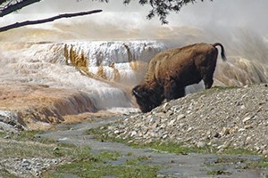 Yellowstone National Park Lodges - guided tours :: Yellowstone National Park Lodges offers a variety of seasonal vacation packages and specials to help you plan your trip and get the most of your national park experience.