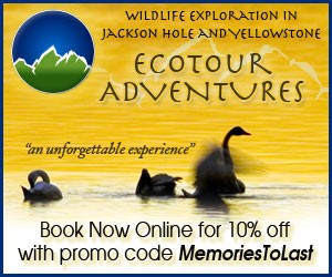 EcoTour Adventures - Book Now Online for 10% off with Promo Code MemoriesToLast.  Jackson Hole Eco Tour Adventures offers a variety of wildlife viewing in the Jackson Hole, Grand Teton, and Yellowstone Ecosystems.