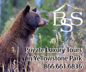Discovery Yellowstone Tours - private luxury tours : Discover Wildlife. Discover Geo-Thermal. Discover Nature. The discovering is endless with Big Sky's only 5-Star tour service. Luxury SUVs, 4 x 4s & Touring Coaches up to 37.