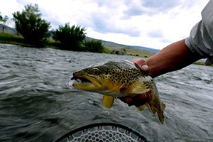 Yellowstone national park fishing guides fly shops for Gallatin fishing report