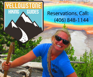Yellowstone Hiking Guides - guided hiking tours - Wildlife hiking safaris to the Lamar Valley and Lone Star Geyser. Tours include expert guides, spotting scopes, packs, trekking poles, bear spray, and gourmet lunch.