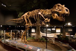 Museum of the Rockies - a Smithsonian Affiliate : Recognized as one of the world's finest research and history museums. Renowned for our dinosaur collection, fossils, permanent & rotating exhibits, history farm & kids events.