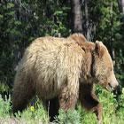 BrushBuck Guides - Scenic Park Safaris