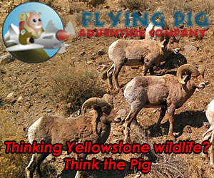 Flying Pig Adventure Company : The friendliest, most professional travel planning company you'll experience for families seeking adventure in the region. From lodging and rafting to horseback, hiking tours, fly shop and guided trips. Plus, pre-built 3-5 day packages. Online booking or by phone, come see us!