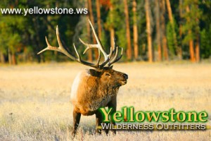 Yellowstone Wilderness Outfitters - Day Rides :: One of Yellowstone's best horseback day-ride outfitters.Select from half-, full-day or Paddle & Saddle combinations. You'll be amazed what you see for our low rate.
