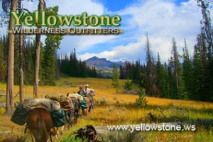 Horse Pack Trips in Yellowstone Backcountry : One of Yellowstone's best pack trip outfitters providing comfortable camps, fishing, wildlife viewing & delicious meals. A trip with us will be remembered forever.