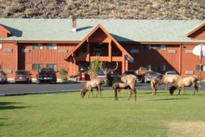 Yellowstone Village Inn - the best in Gardiner :: Exceptional value in moderately-priced accommodations. Indoor pool, continental breakfast & laundromat, kitchenettes. Want to see wildlife? They often are in our yard.