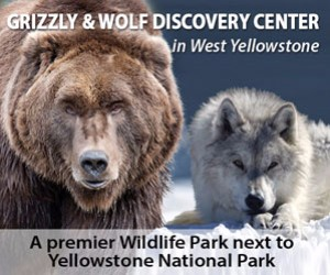 Grizzly & Wolf Discovery Center : A not-for-profit educational preserve protecting grizzly bears and gray wolves for research purposes. Come photograph, video and view these animals in a natural setting year-round. Also featured are many endangered birds of prey and raptors, a super place for photographers and naturalists.