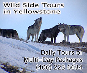 Wild Side Wildlife Tours