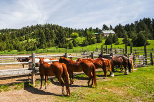 Diamond J Guest Ranch - Cabins & Packages
