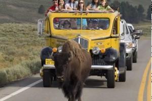 Yellowstone Historic Yellow Bus Tours