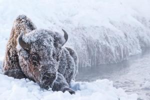 Off the Beaten Path - winter wildlife safari
