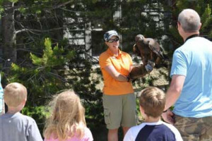 Grizzly and Wolf Discovery Center - for the family