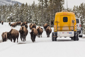 Yellowstone National Park Lodges - winter tours
