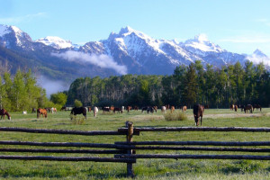 All-Inclusive Dude Ranches in Yellowstone | DRA
