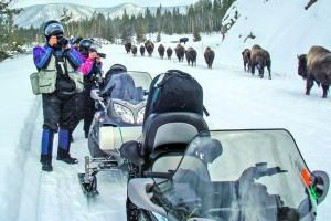 Yellowstone Snowmobiling Snowmobile Rentals Tours Alltrips