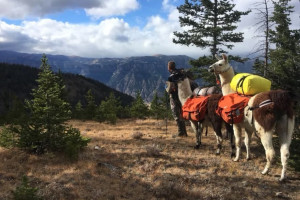 Llamas Unlimited - Yellowstone Llama Pack Trips
