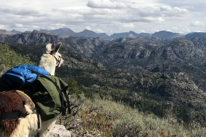Llamas Unlimited - Yellowstone Llama Hiking Trips