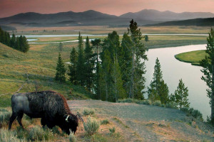 Wyoming Guide Company | Yellowstone Private Tours