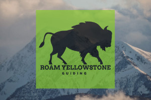 Roam Yellowstone Winter Safari and Hot Spring Soak