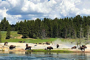 Yellowstone Scenic Tours | See the Lower Loop
