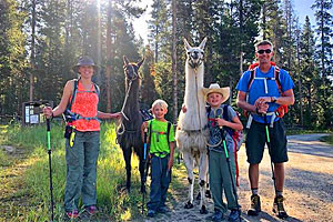 Montana Llama Guides | Man's Best Hiking Companion