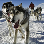 Iditarod Sled Dog Tours - Experience This!