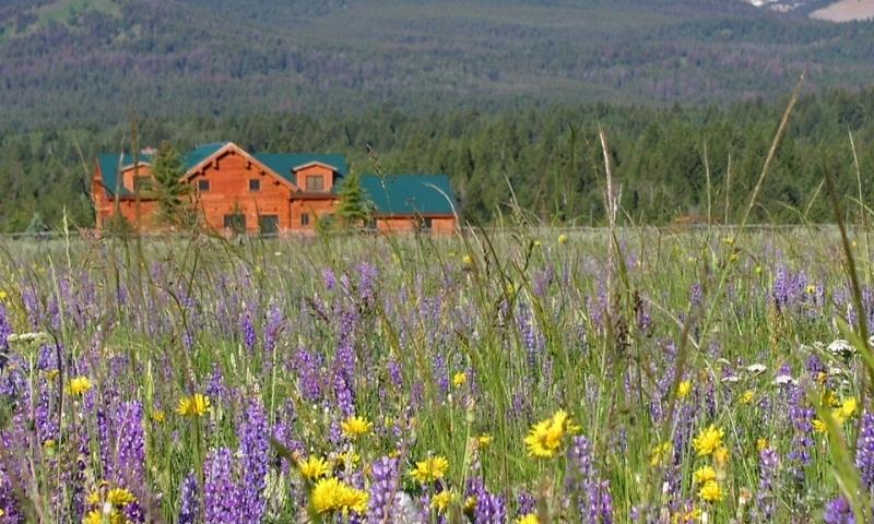 Island Park Idaho Wildflowers