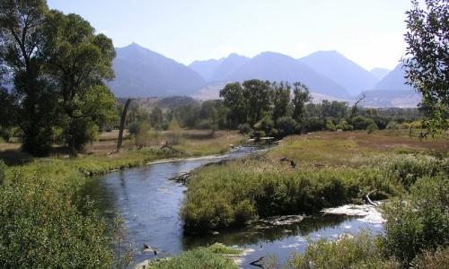 Ohair Spring Creek in Livingston