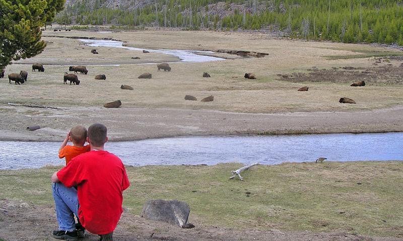 Yellowstone Kids Fun