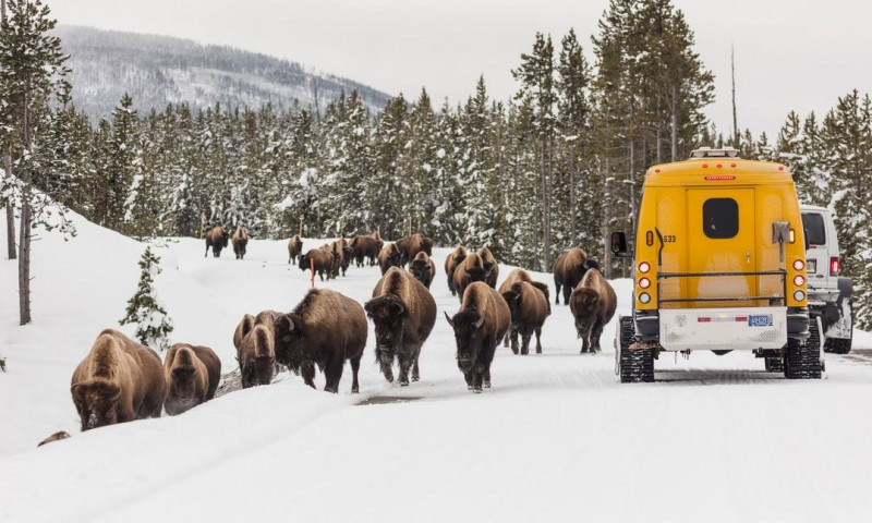 Yellowstone National Park Winter Vacations Activities