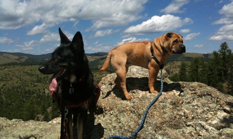 Black Hills Pet Information