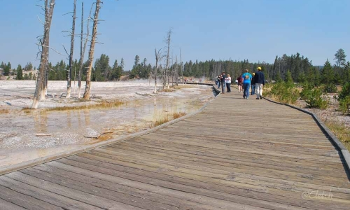 Boardwalk to fountain paint pots in yellowstone