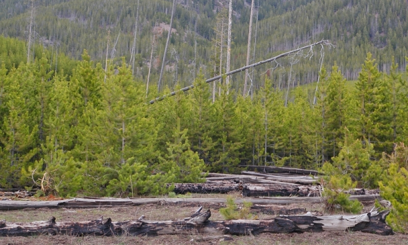 Yellowstone Fire Fires 1988
