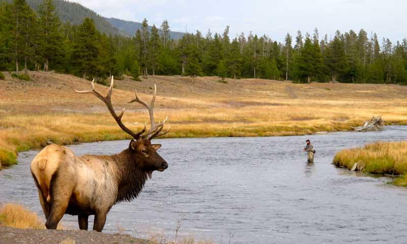 Firehole River Yellowstone National Park Fly Fishing