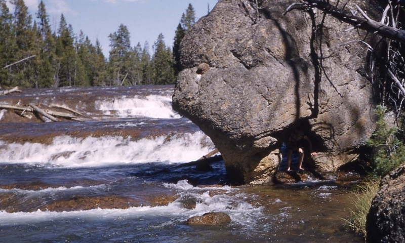 Gibbon river yellowstone national park fly fishing for Yellowstone river fishing