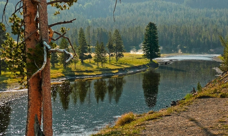 Lewis River Yellowstone National Park Fishing Camping
