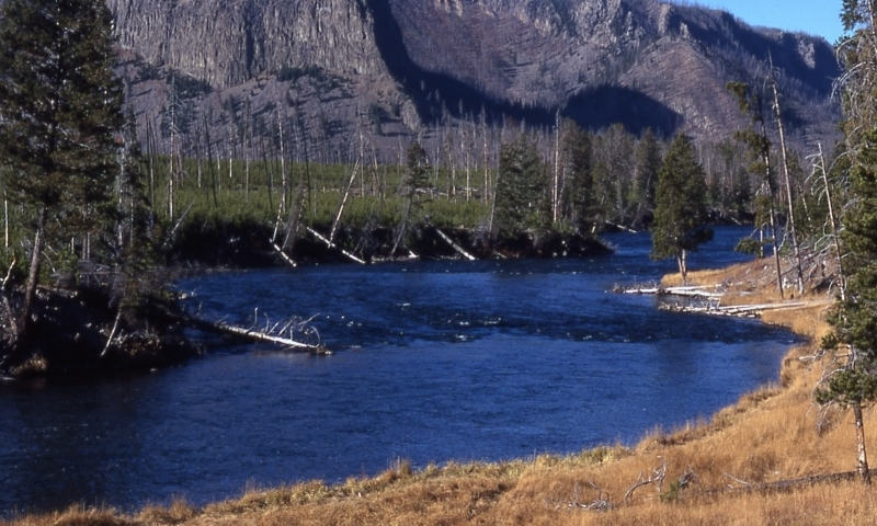 Madison River Yellowstone