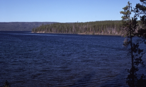 Shoshone Lake Yellowstone National Park
