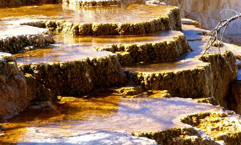 Yellowstone NP mammoth Hot Springs