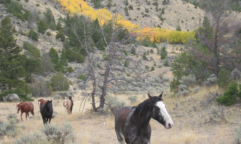 Wild Horses in Paradise Valley