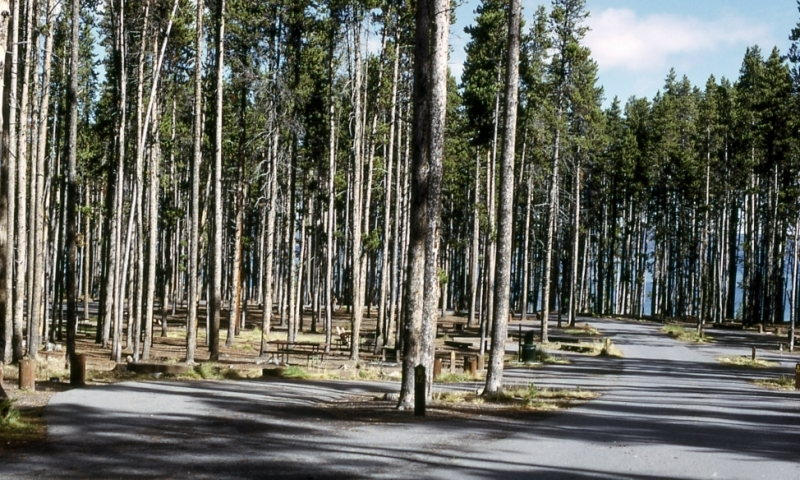 Grant Village Campground Yellowstone