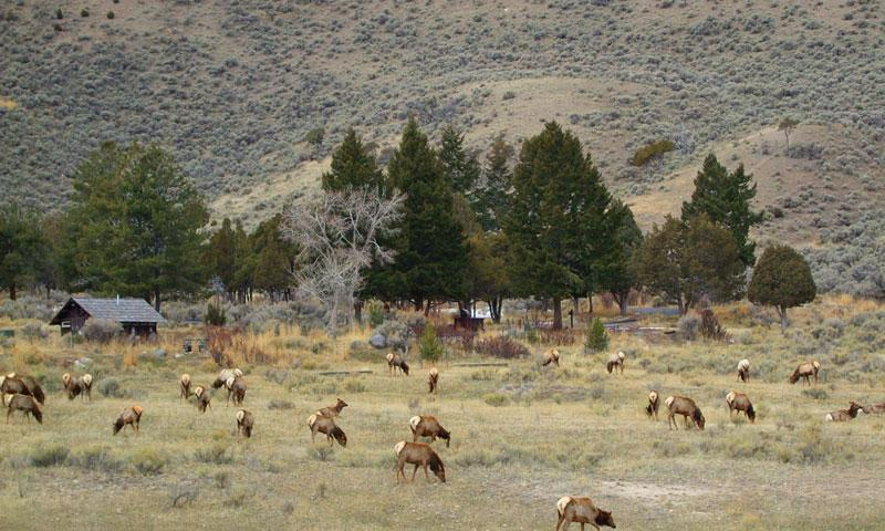 Mammoth Hot Springs Campground in Yellowstone