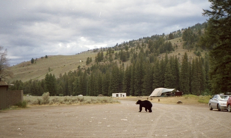 Slough Creek Campground Yellowstone Camping Alltrips