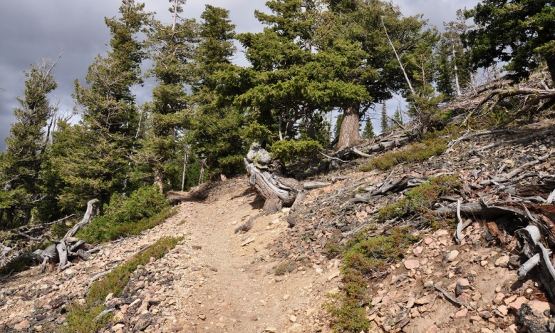 Yellowstone Mammoth Area Day Hikes Alltrips