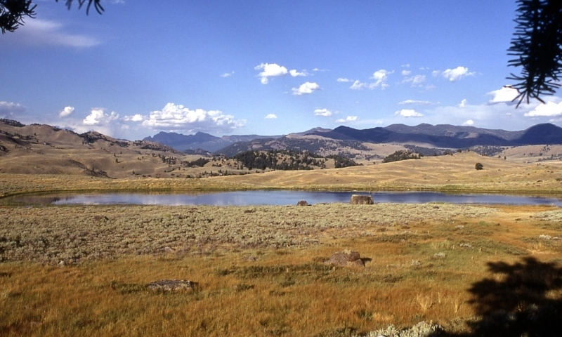 Yellowstone Tower Roosevelt Area Day Hikes Alltrips